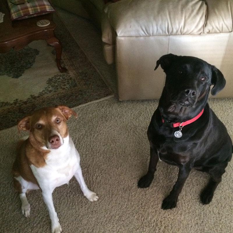 Sadie and Bella