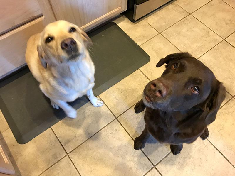 Lexie and Baily