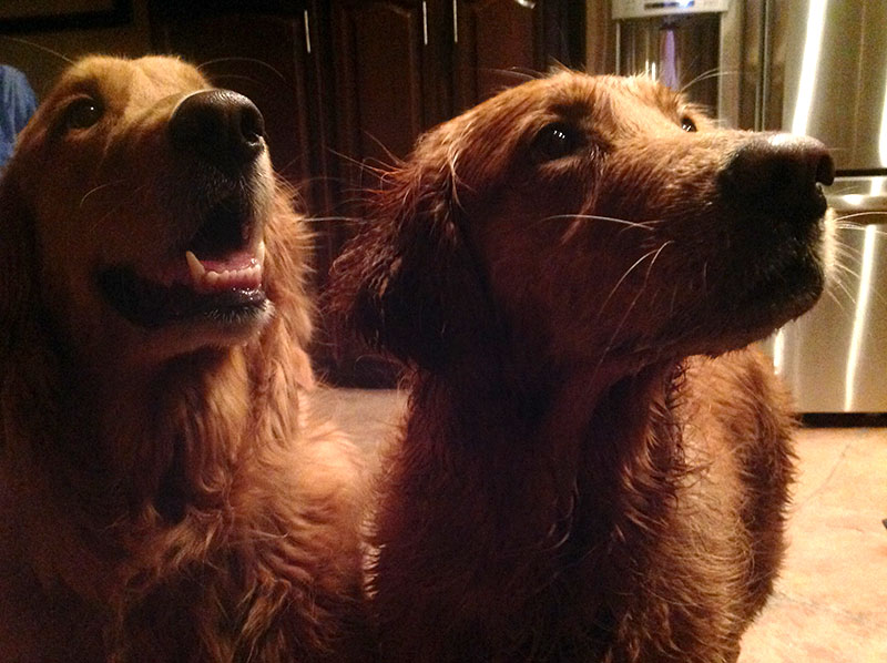 Bailey and Brody