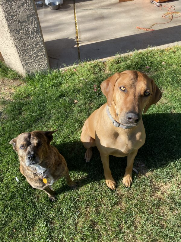 Milo and Cici